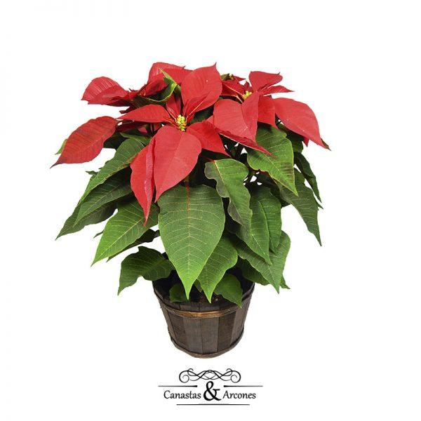regalos de empresa -arcones navideños-canastas-para-arcones-noche-buena-canastas-y-arcones